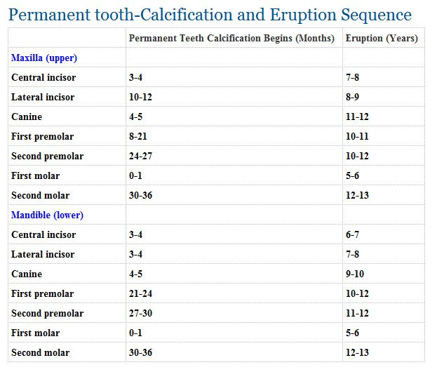 Tooth eruption charts you might also like ccuart Image collections