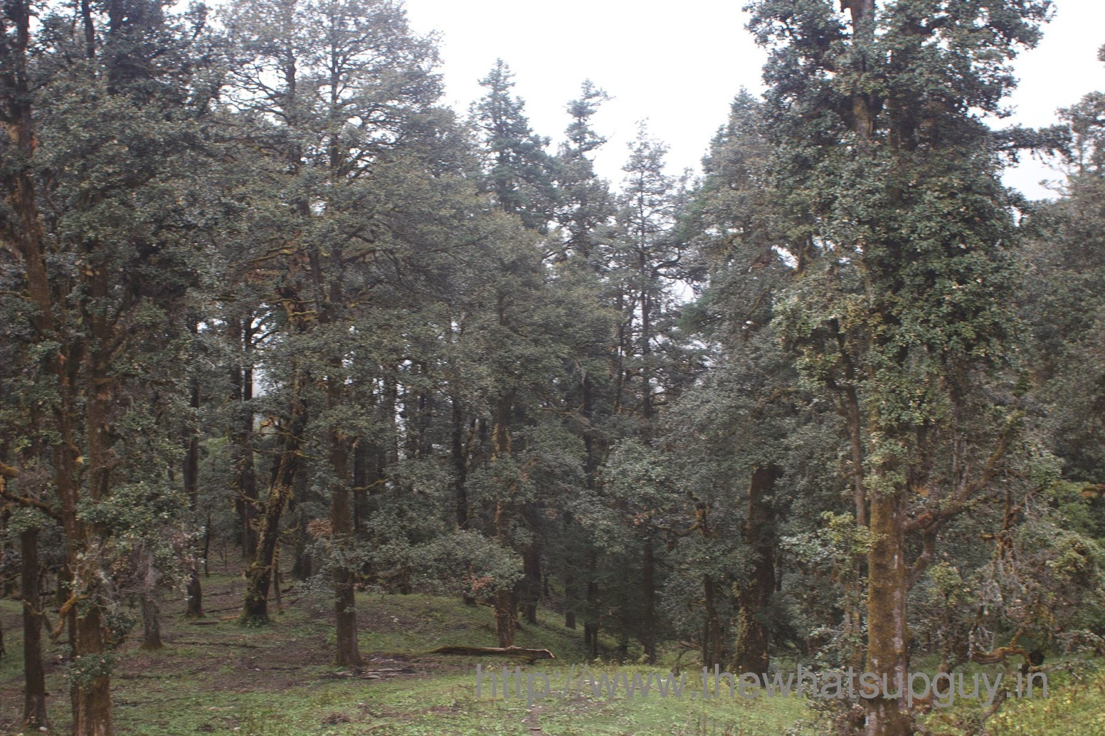 Trees Roopkund Trek With India Hikes Day 6