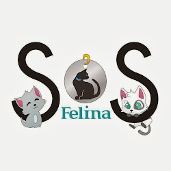 SOS Felina Grupo Teaming