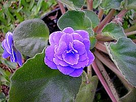 www.jardineiro.net -
