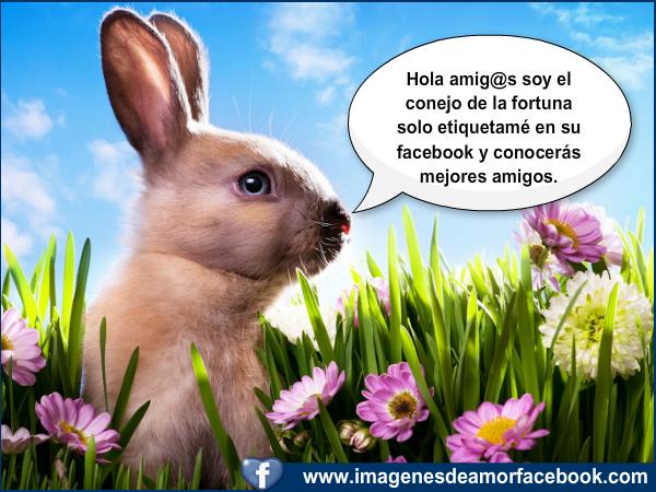 Postales para facebook lindo conejo de la fortuna