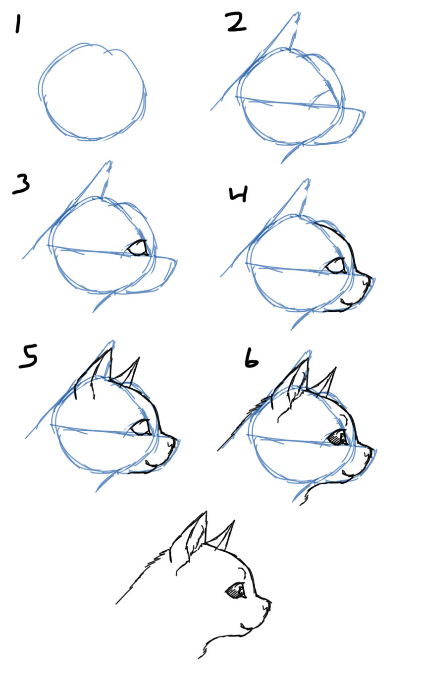 Gallery For gt Cat Face Profile Drawing