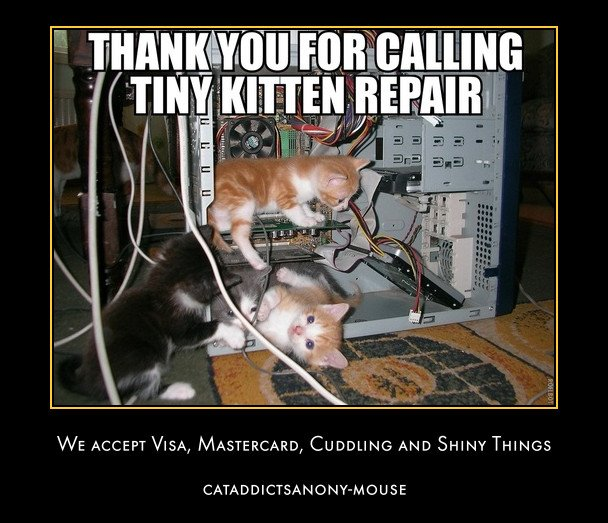 Thank You For Calling Tiny Kitten Repair