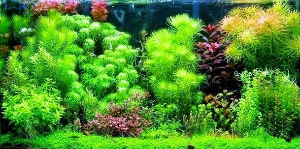 Mengenal jenis aliran aquascape informasi dunia air - Gambar aquascape ...