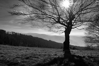 Czarno-biała fotografia krajobrazowa. Beskidzkie szlaki. fot. Łukasz Cyrus