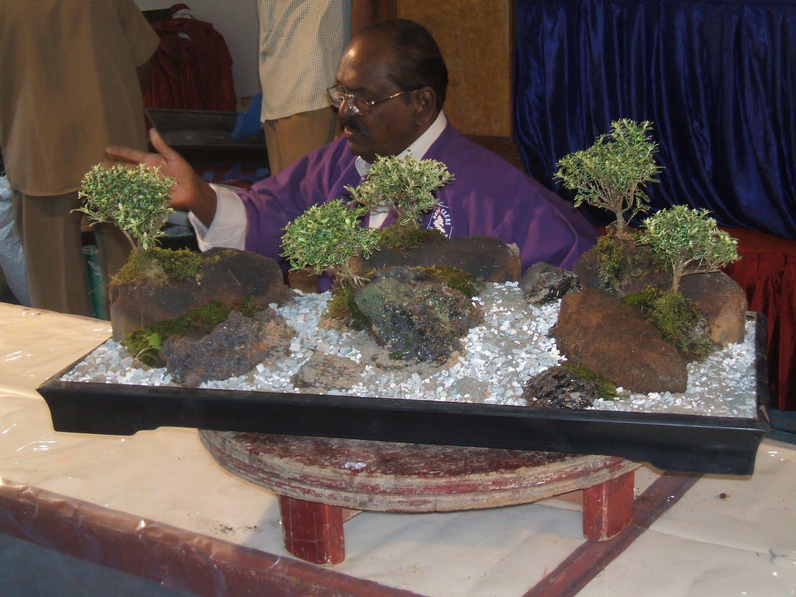 Bodhi Bonsai Chennai India August 2011