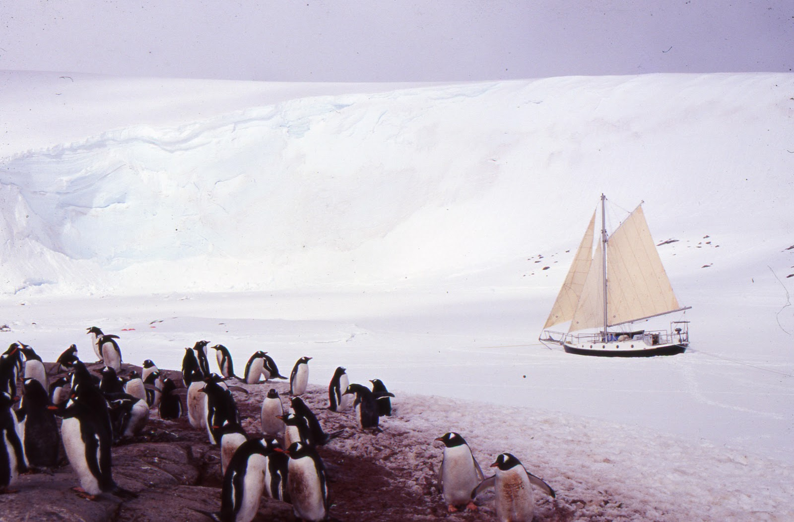 [Imagen: 49b+19991121+Lockroy+sails.jpg]