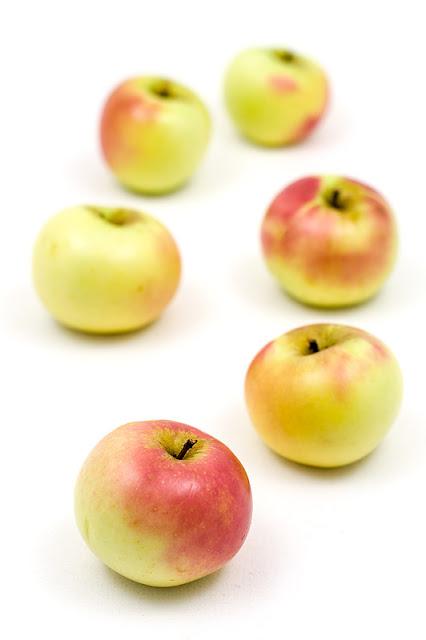 Jabolka krivopecelj fokus spredaj