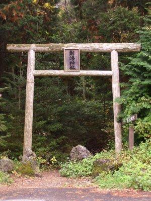 Hutan Aokigahara Tempat Bunuh Diri Angker Di Japang