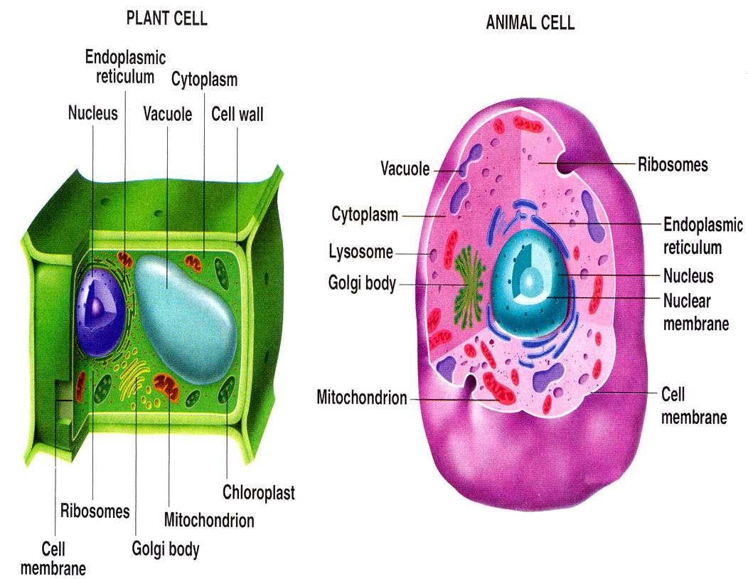 sel makhluk hidup