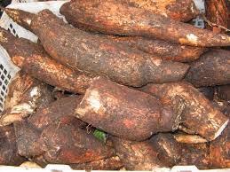 Manfaat Ubi kayu / Singkong sebagai bahan pangan