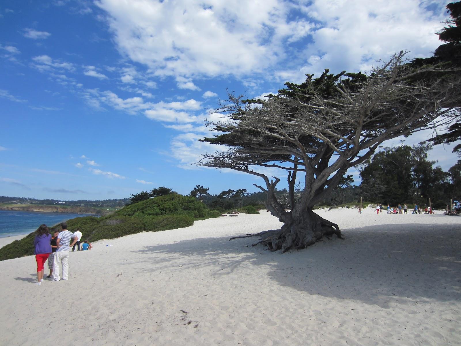Famille foret vacances 2012 usa de monterey palo alto - Sublime maison blanche de la plage en californie ...