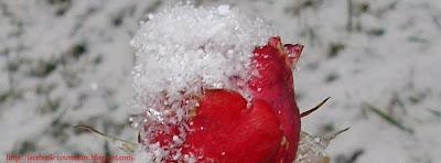 Couverture facebook rose neige 4