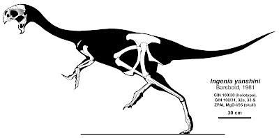 Ajancingenia skeleton
