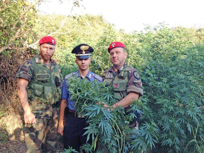 scoperte 2000 piante di canapa indiana alle porte di