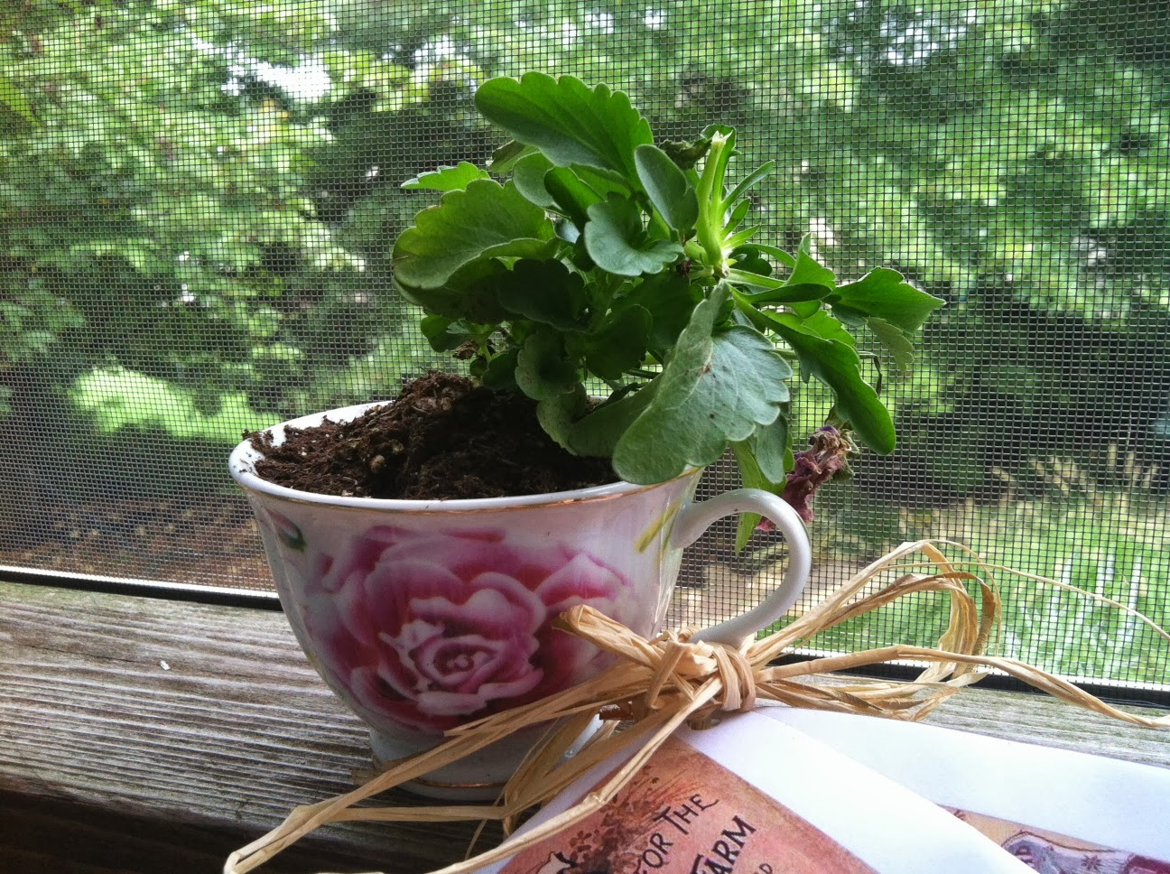 The College Cuisiner Diy Planted Teacup Favors And Seed Packets