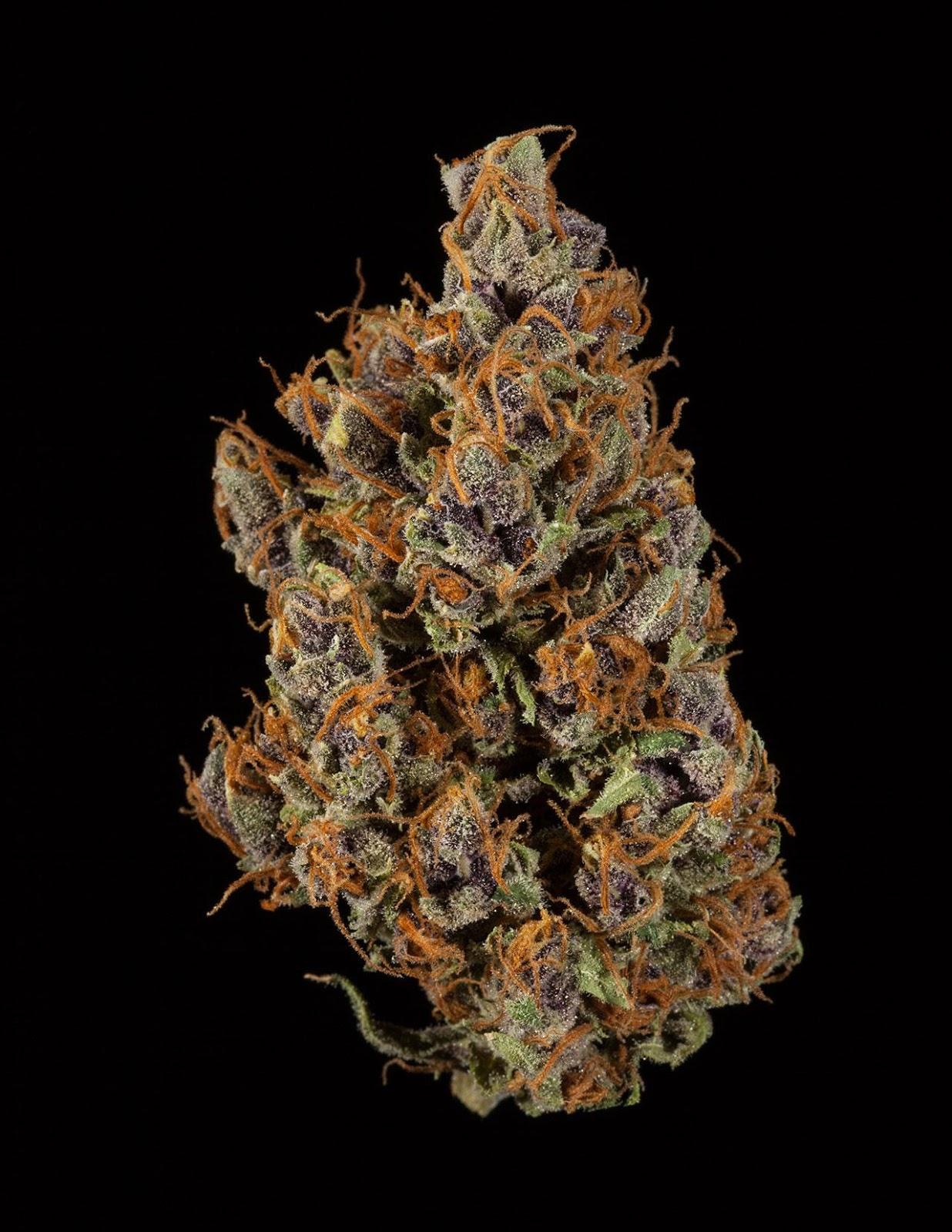 Purple Tangie