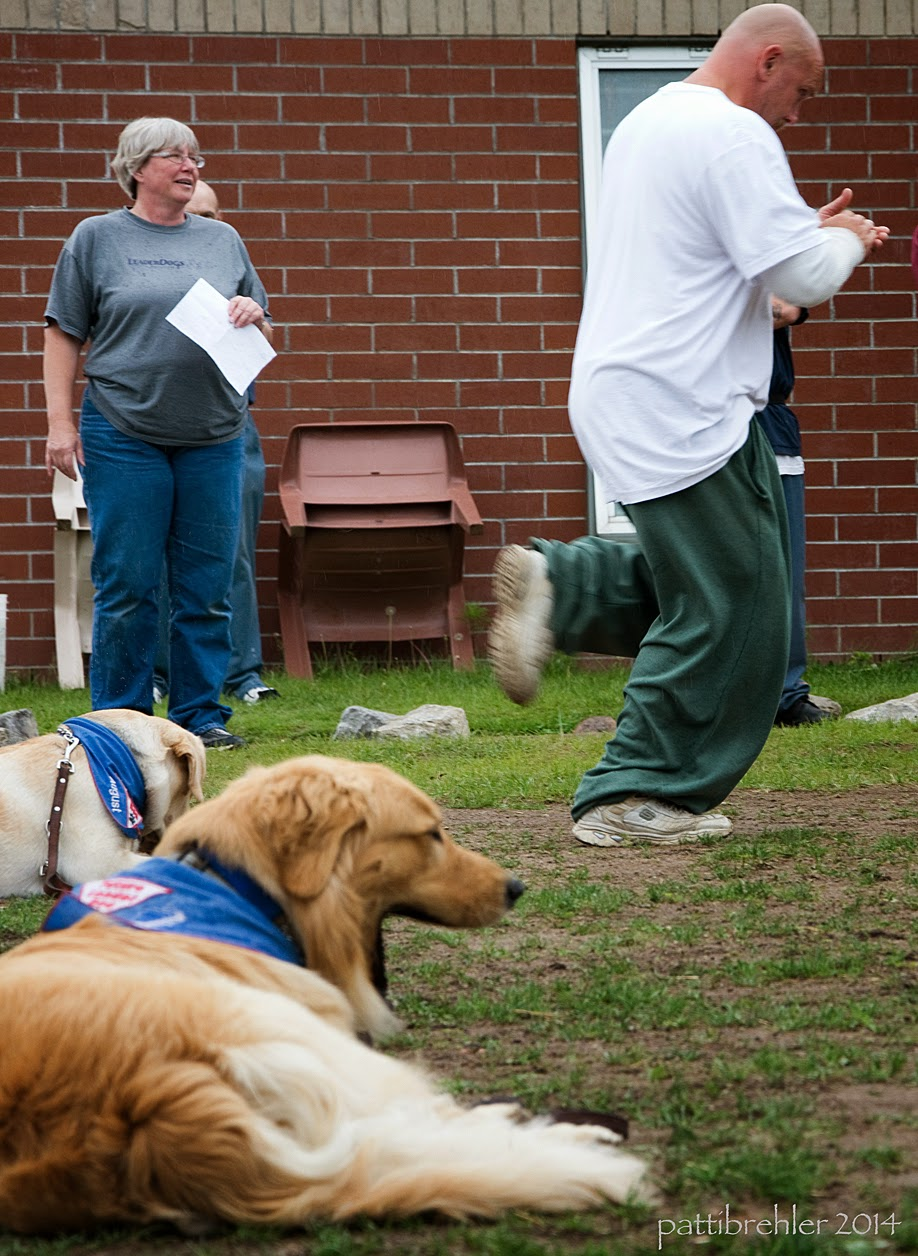 The two goldens are still lying down. The one in the foreground is yawning. In the background is a woman wearing blue jeans and a grey t-shirt; she is holding a piece of paper and smiling. A man wearing green prison pants and a white shirt is running toward the right clapping his hands.
