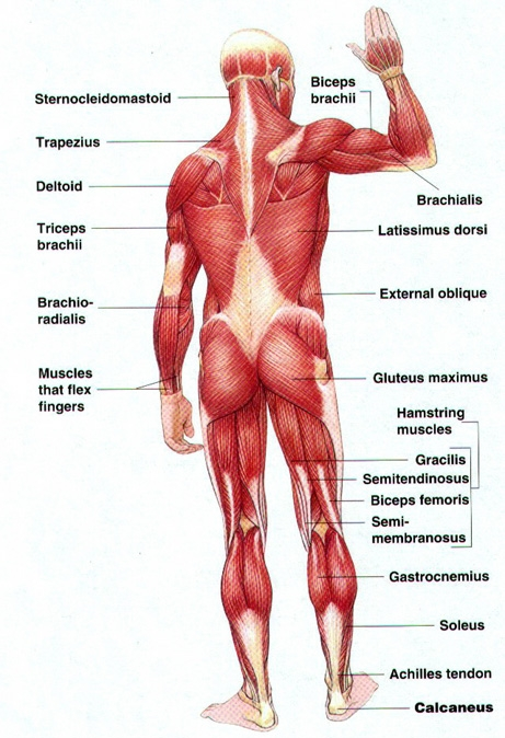 Body Balancing Blog 070813