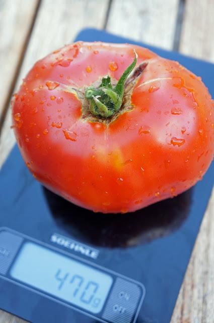 tomat rekord
