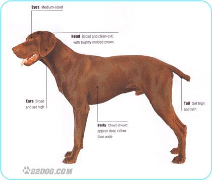 Short Haired Large Slow Dog Breeds