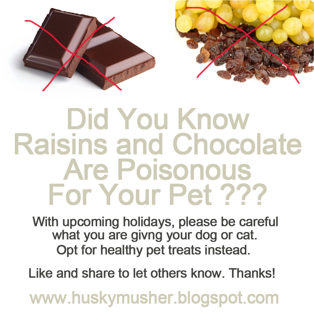 Katerina's Journal: Raisins And Chocolate Are Poisonous For Dogs