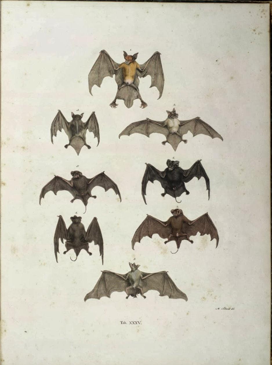 Inspire Bohemia Antique Bat Illustration Prints
