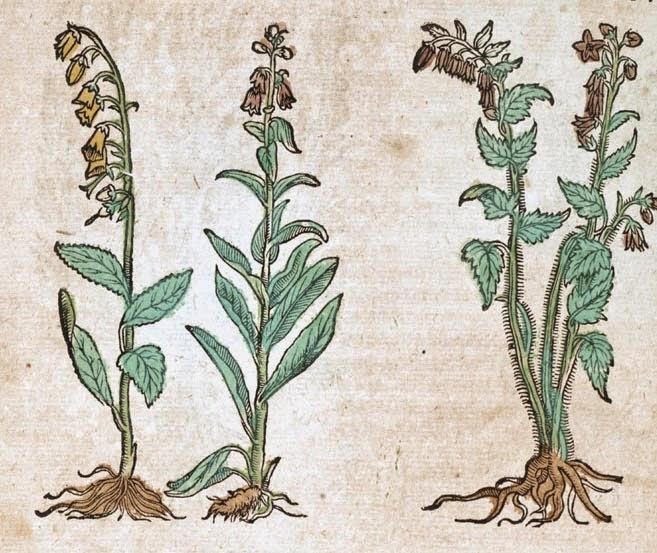 Calendrier du Bon Jardinier - JUIN