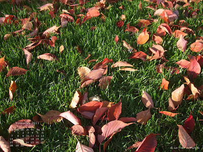 Feuilles mortes, avenue Foch - Fond d'écran de novembre 2011, avec et sans calendrier