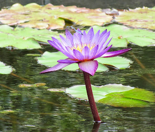 spiritual awakening photo, spiritual opening picture, spirituality,