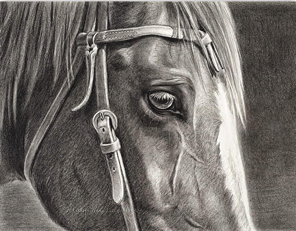 caballos-en-dibujos-realistas