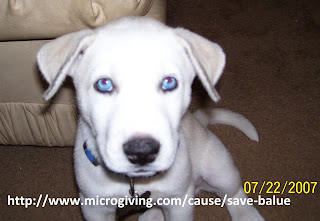 Save Balue http://www.microgiving.com/cause/save-balue