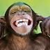 Maymun facebook zaman tüneli kapak fotoğrafları ve resimleri
