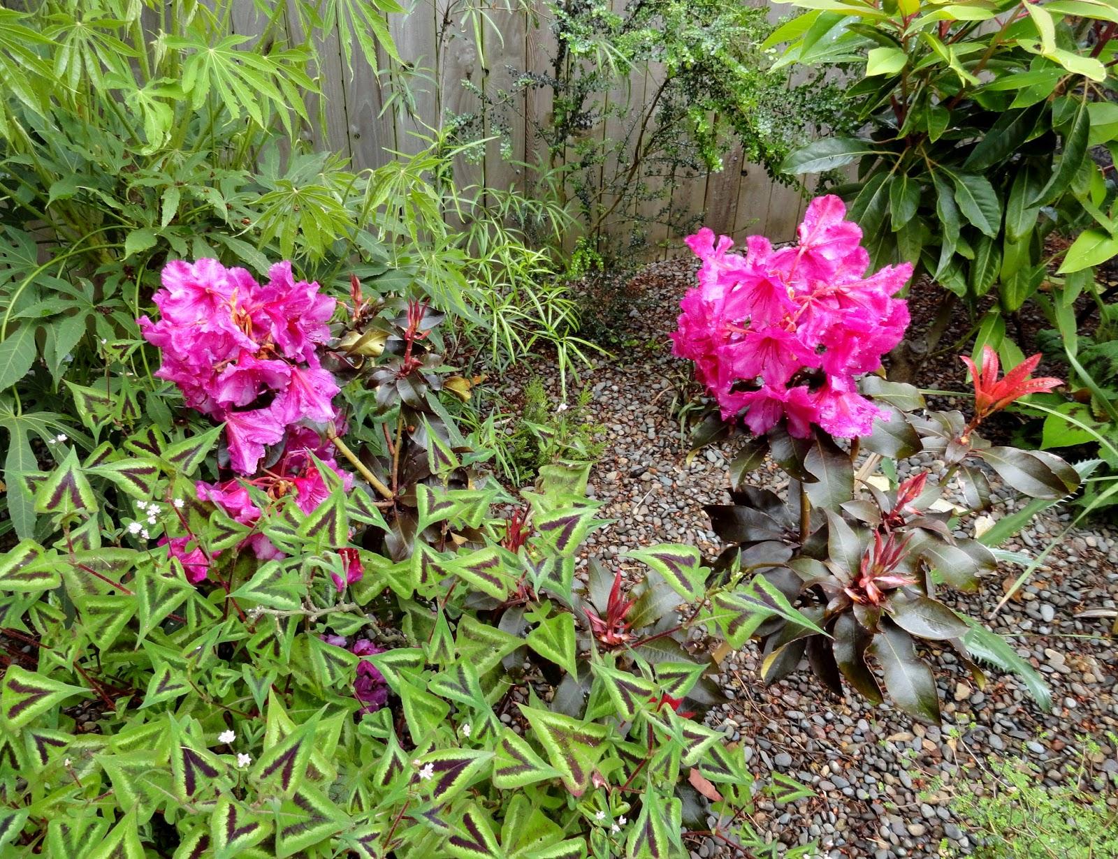 danger garden garden blogger 39 s bloomday for may 2015. Black Bedroom Furniture Sets. Home Design Ideas