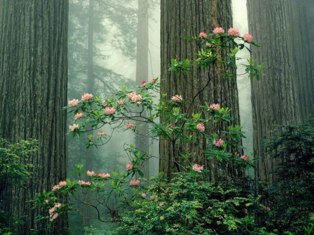 Belleza de la Naturaleza - Hermosos Paisajes de Nuestro Mundo Parte 1 ...