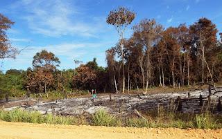 Área de preservação permanente desmatada e queimada.