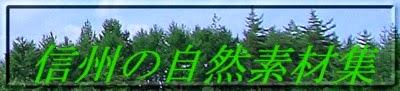 信州の自然素材集