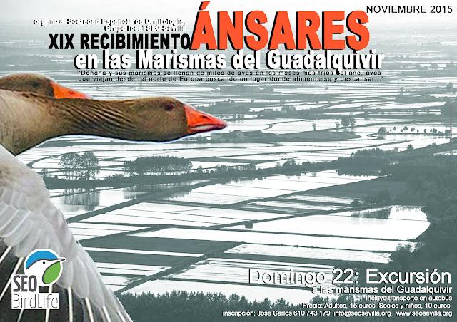 """Excursión ornitológica organizada por el Grupo Local SEO-Sevilla de SEO/BirdLife a las marismas del Guadalquivir. """"XIX Recibimiento a los Ánsares"""", domingo 22 de noviembre de 2015."""