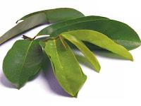 4 Herbal untuk Kanker yang Direkomendasikan Dokter