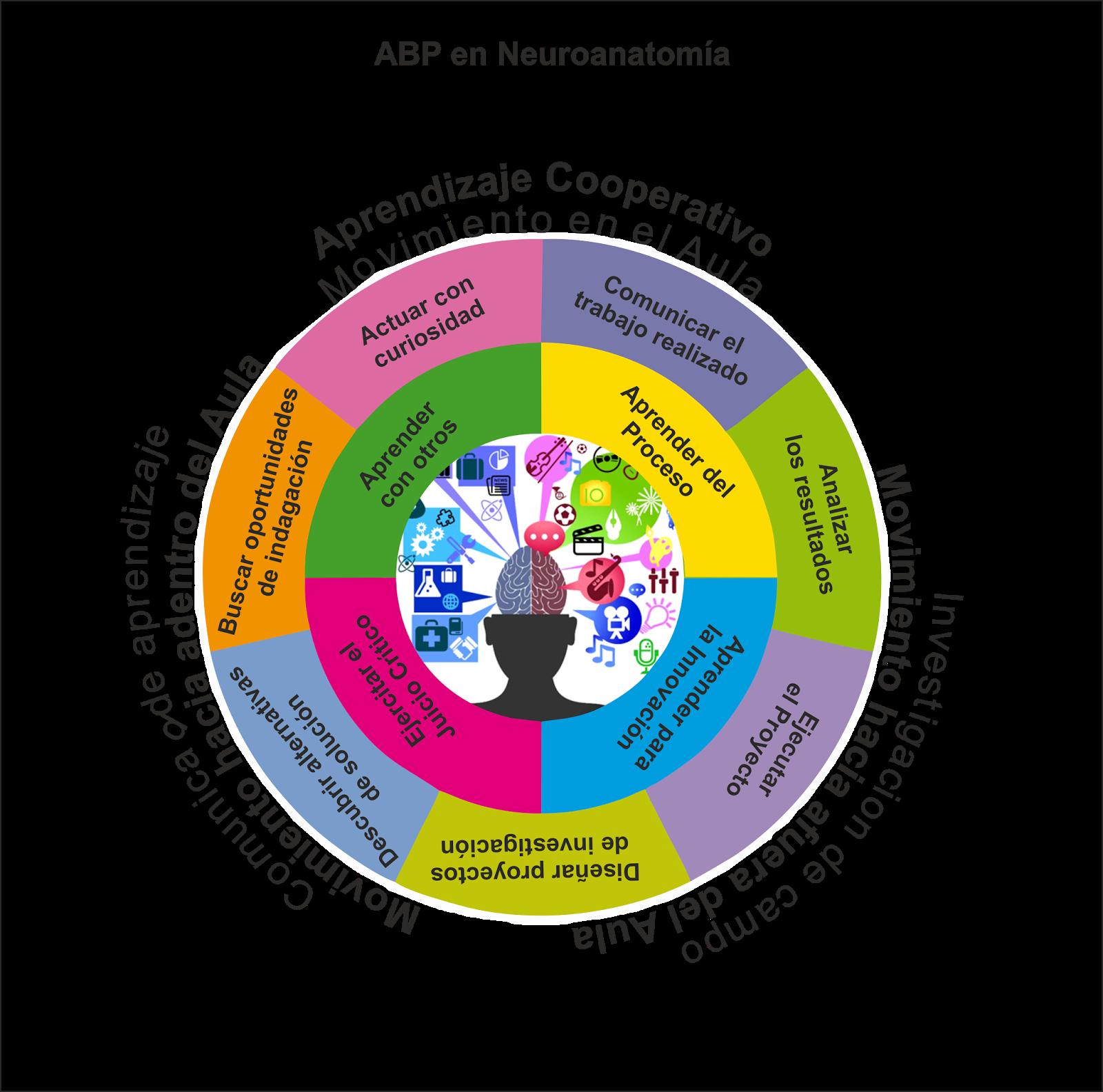 ABP Anatomia