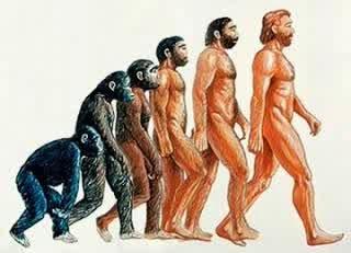 gambaran-teori-evolusi