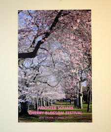 Wooster Square Cherry Blossom Festival Poster!