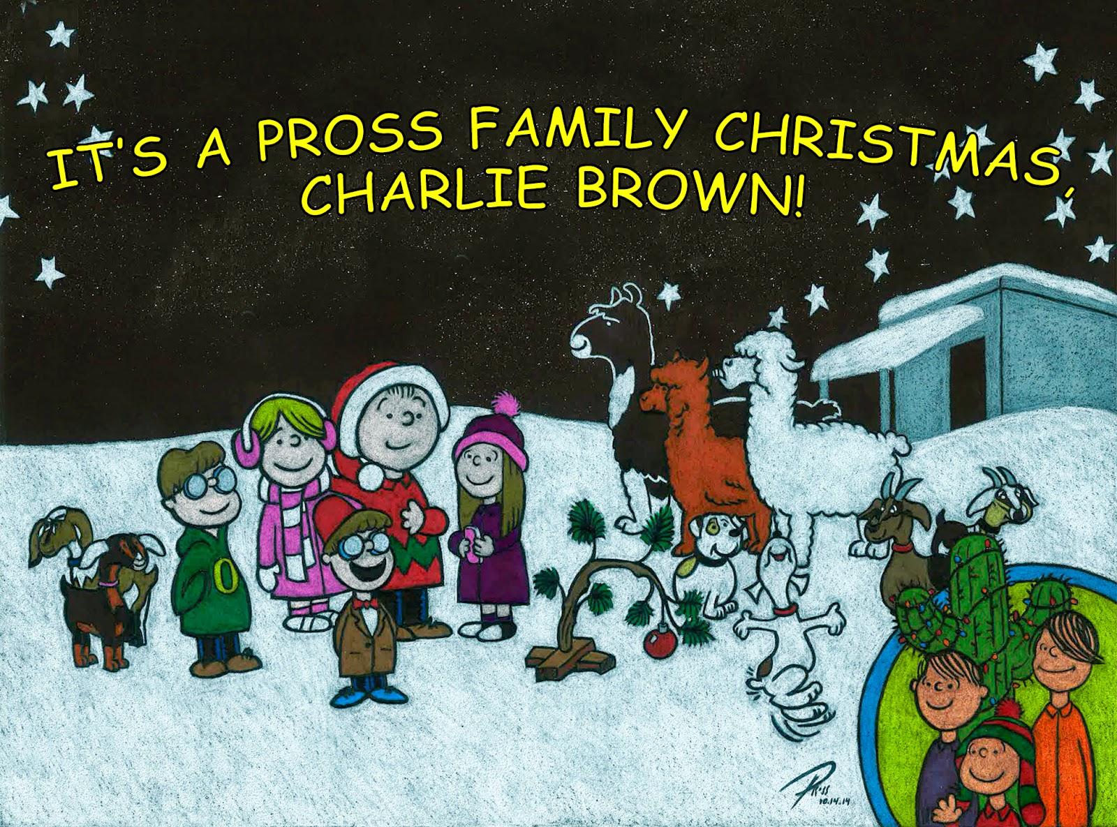 The Brady Bunch Lied: Christmas Card 2014