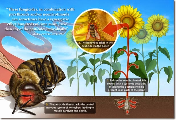 según un estudio del reino unido publicado en nature, las abejas