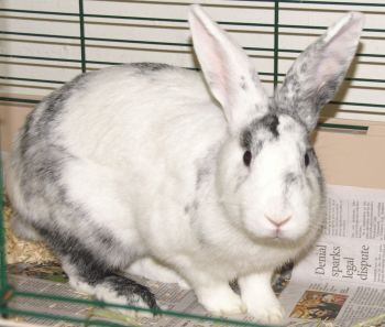 Oryctoichthyes: A day full of bunny