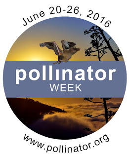 Support Pollinators. Plant Natives.