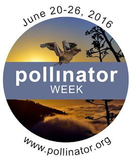 Support Pollinators. Plant Natives.