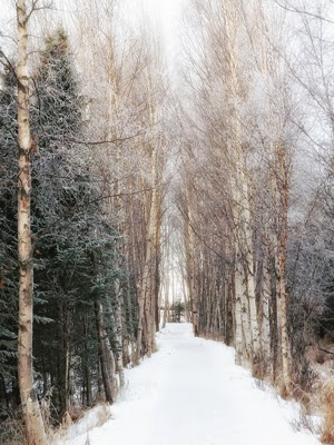Winter Pathway by Doug Brown