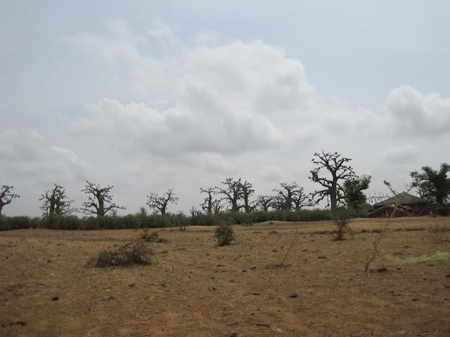 IMG_3302 ▷ La Reserva de Bandia y Accro Baobab Adventures