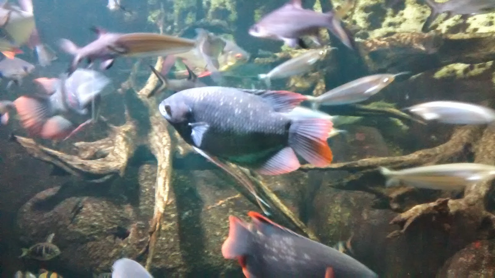 Mit Kind in Berlin Aquarium Berlin Runzelfuesschen